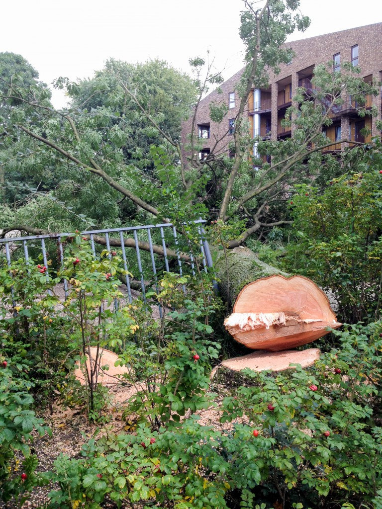 Kappen boom aan de Canadalaan-zijde van het bouwterrein.
